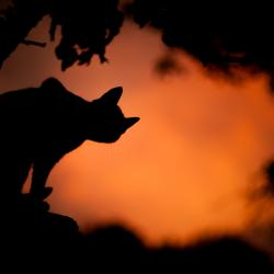 silhouette of black cat against an orange sunset